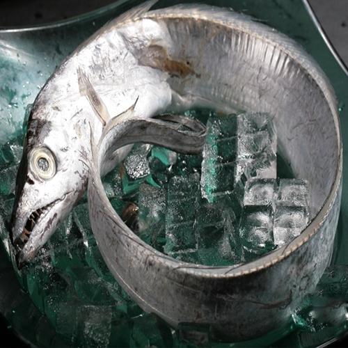 连云港带鱼
